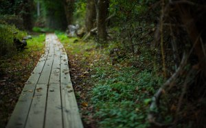 path-road-summer-forest-nature-plants-beauty