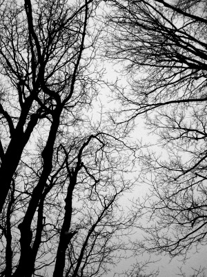 Trees branches and sky 12 5 2010